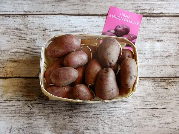 patate magenta love
